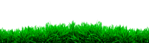 All Editing Grass Png Zip File, Photoshop All Editing Stocks