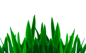 Best Png, Editing Png, Grass Png