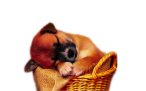 Hd Dog Png